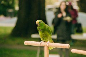 Parrot - 3